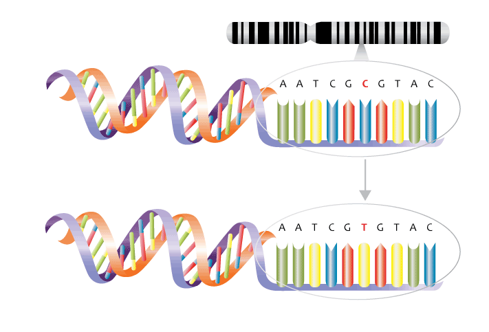 application of single nucleotide polymorphism