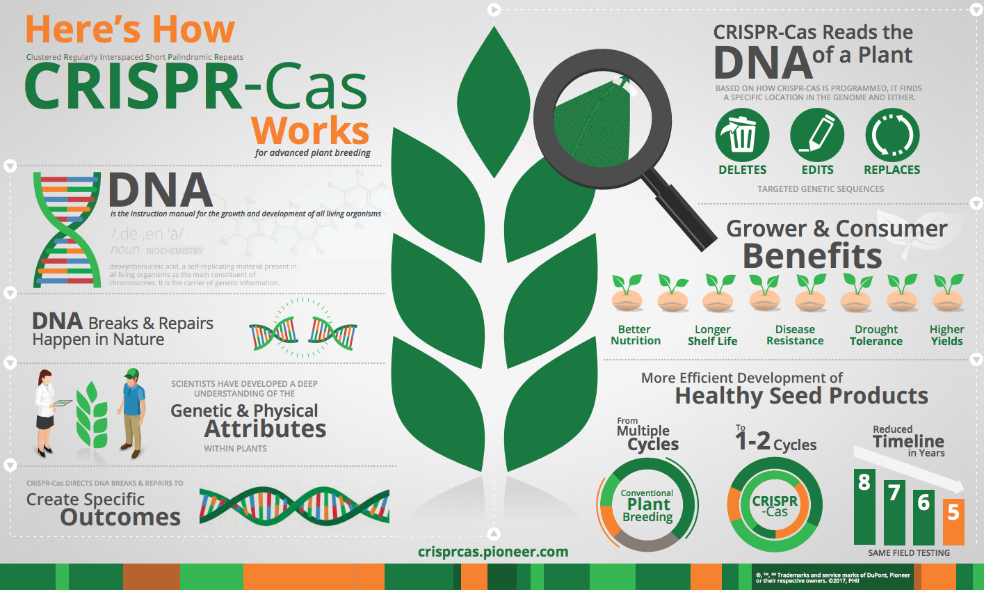 application of genetic engineering in agriculture